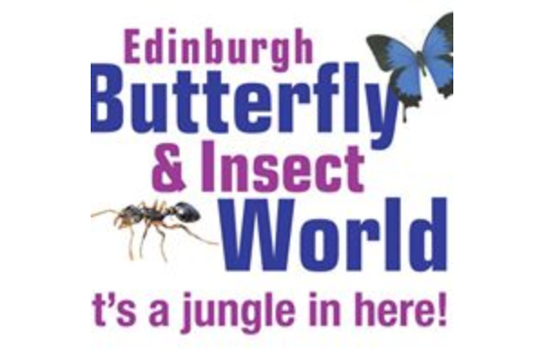 Butterfly and Insect World slide 2